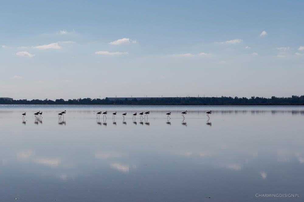 flamingi-nad-jeziorem-slonym